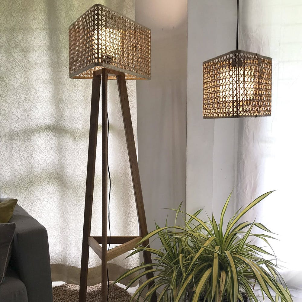 Plant,Furniture,Light,Product,Lamp,Shade,Wood,Textile,Branch,Window