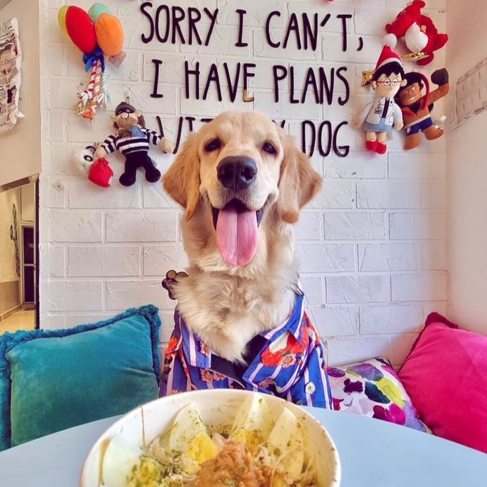 Food,Dog,Picture frame,Dog breed,Staple food,Tableware,Carnivore,Happy,Companion dog,Ingredient