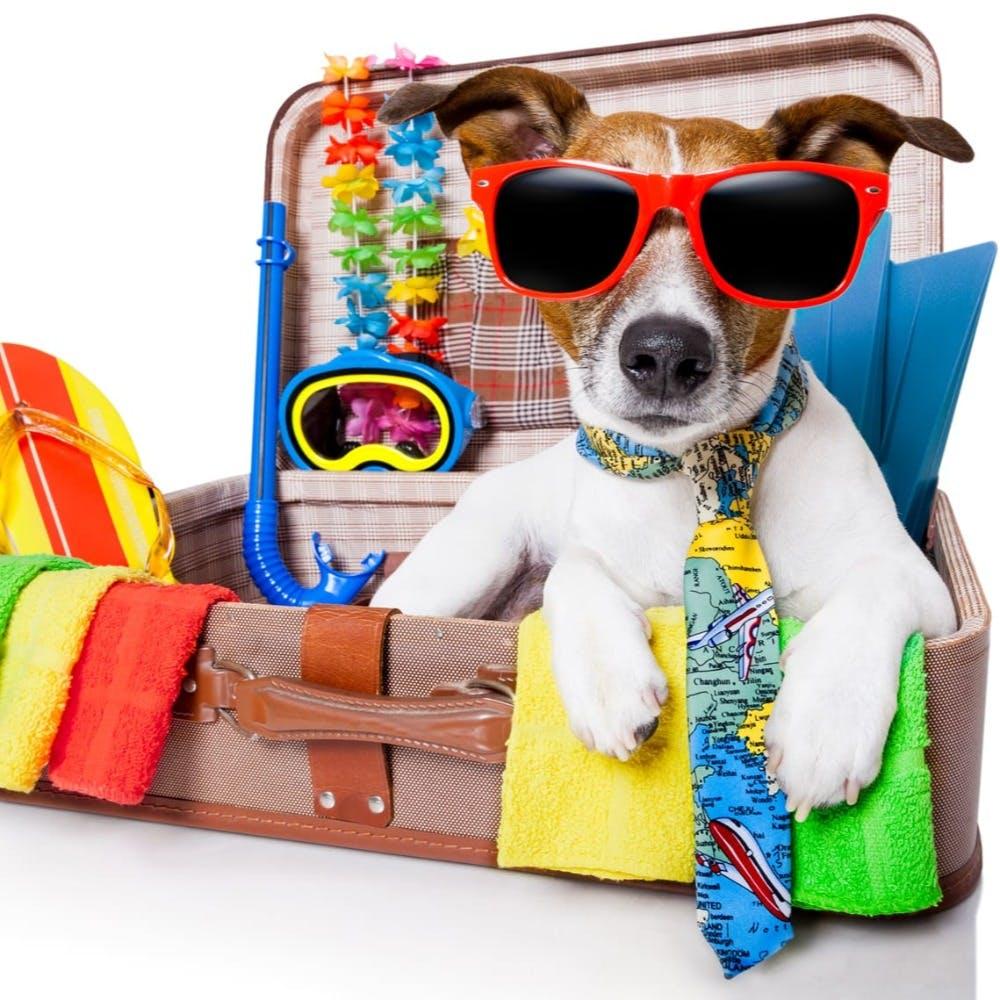 Sunglasses,Product,Dog,Goggles,Vision care,Eyewear,Sleeve,Carnivore,Bag,Dog breed